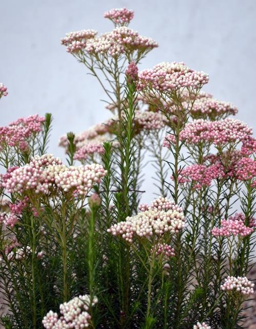 about sacha mccrae living gardens landscape design - Living Gardens Landscape Design