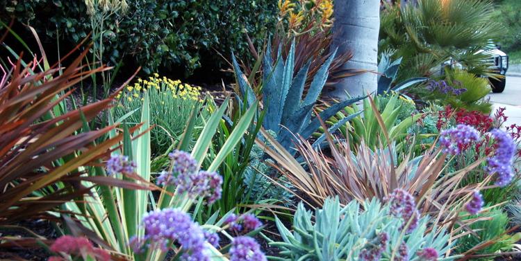 succulent garden living gardens landscape design - Living Gardens Landscape Design