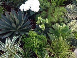 contemporary garden - Living Gardens Landscape Design
