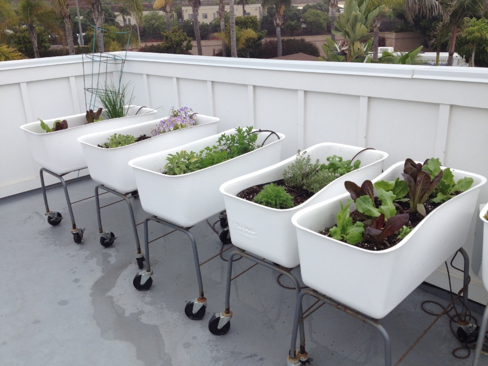 Cute herb and lettuce beds!