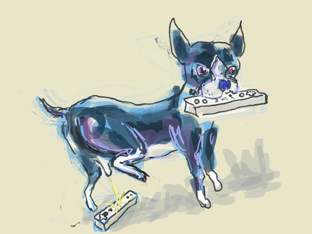 boston-terrier-wee-wii
