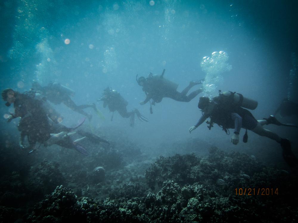 divers-1.jpg
