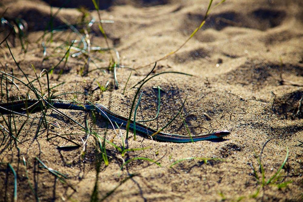 beach snake sand.jpg