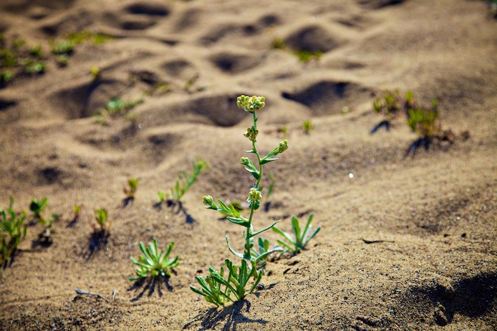 beach plant sand.jpg