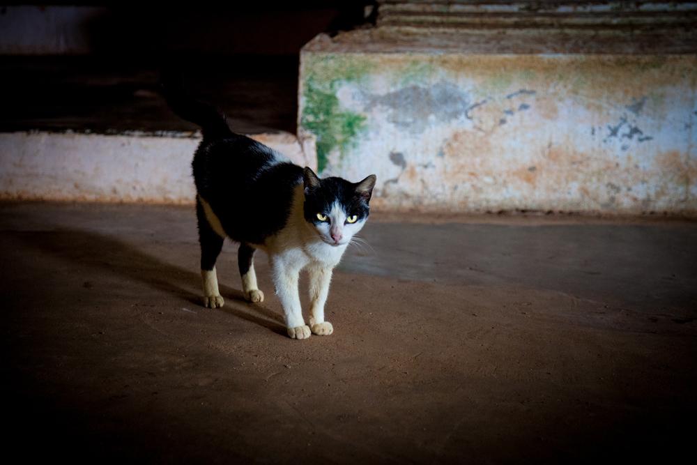 buddah cave cat-1.jpg