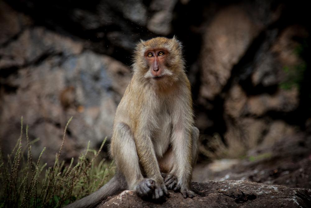 buddah monkey with flies-1.jpg