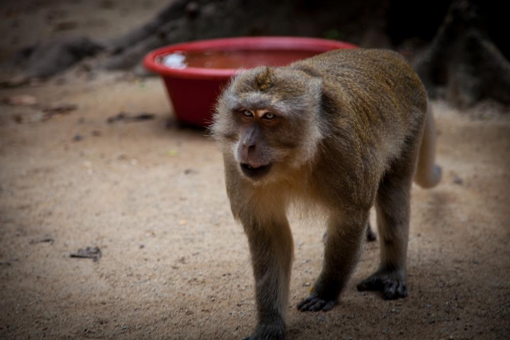 buddah monkeys & red bowl-1.jpg