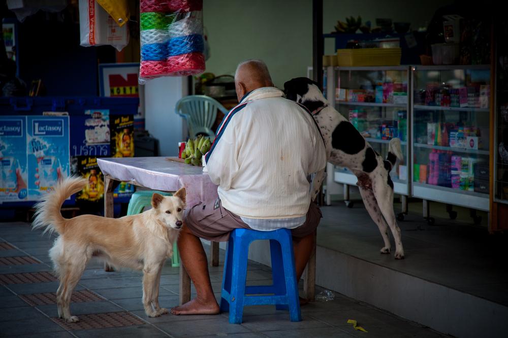 huahin dogs & owner-1.jpg