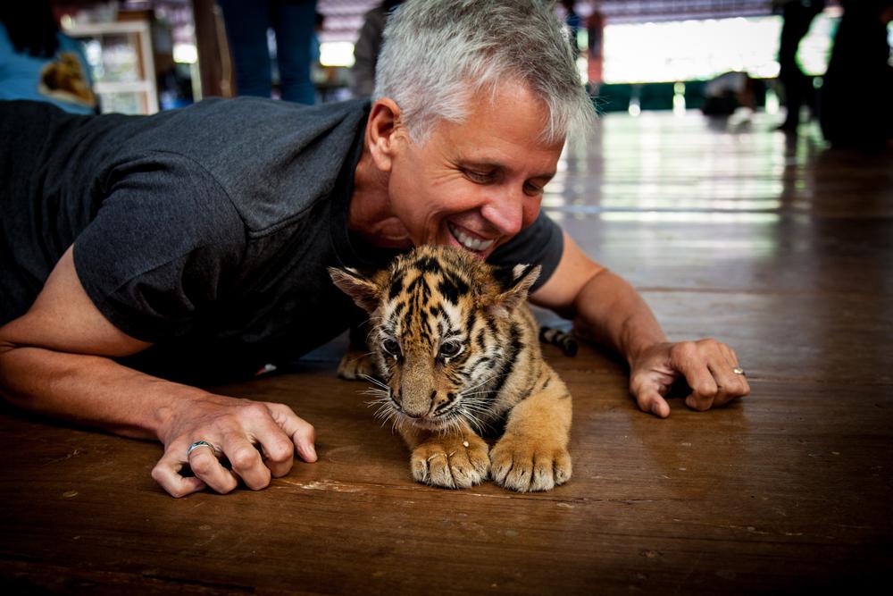 tiger temple dan3-1.jpg