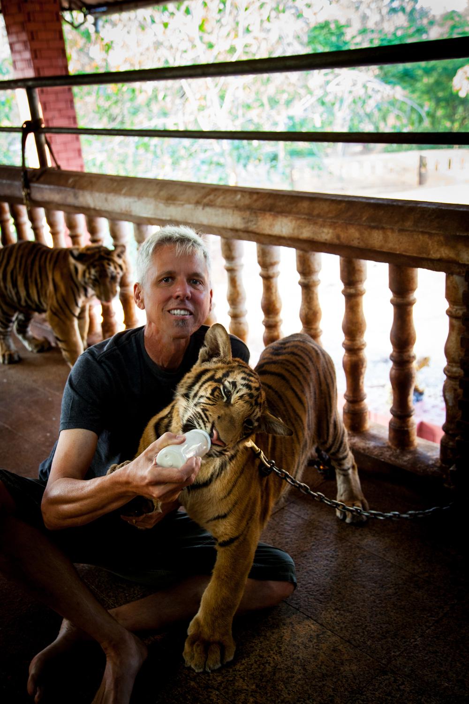 tiger temple dan-1.jpg
