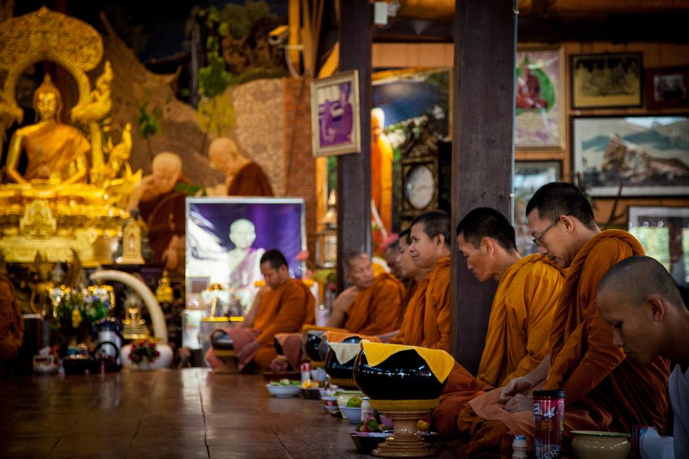 tiger temple monks2-1.jpg