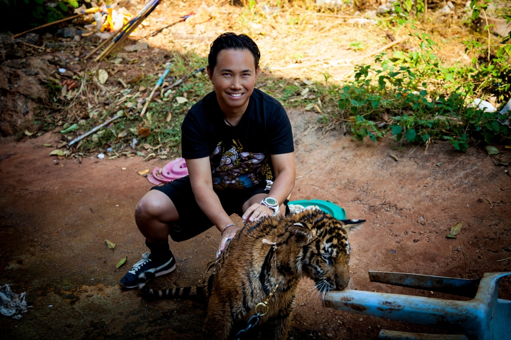 tiger temple bobby wash-1_ppp.jpg