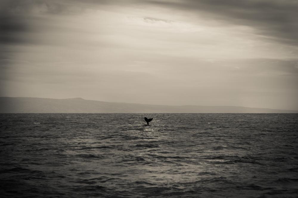 whale tail-1.jpg