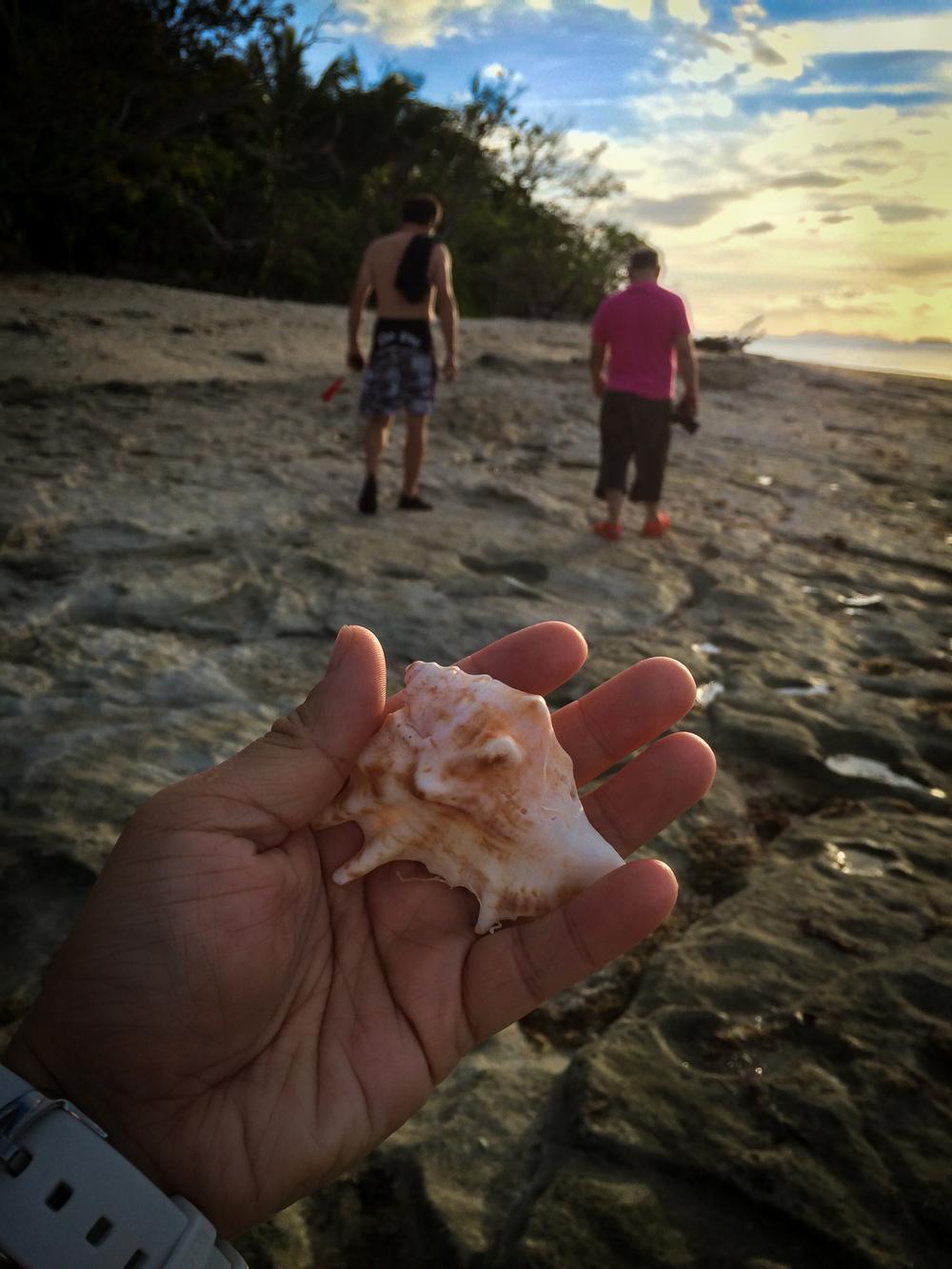 seashell hand.jpg