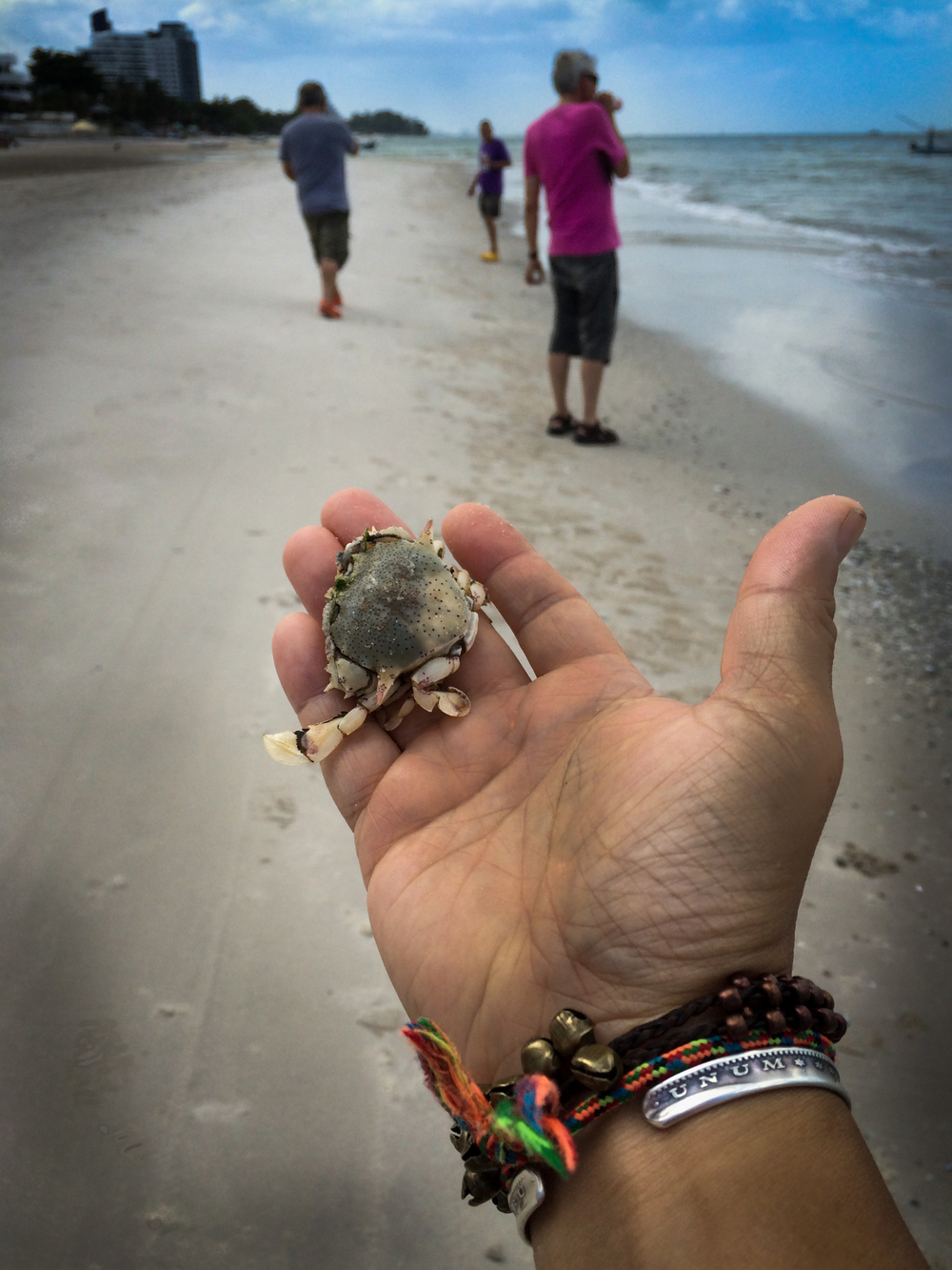 crab in hand-1.jpg