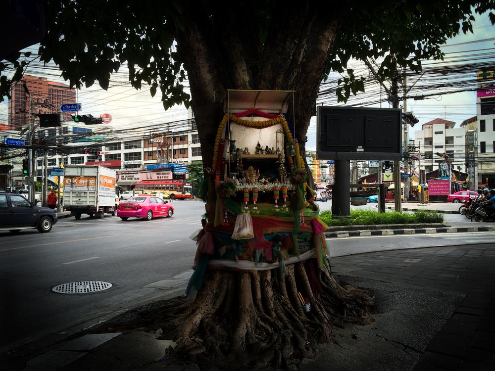 pray tree2-1.jpg