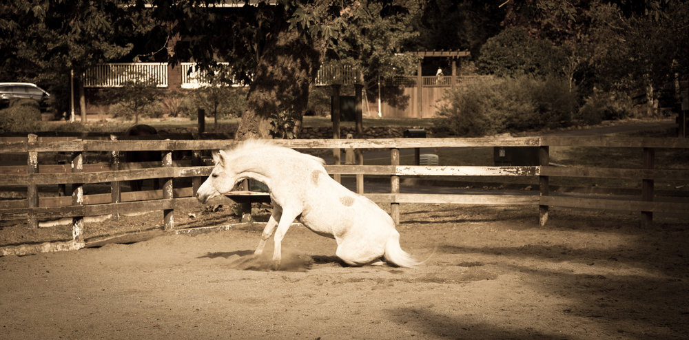 Horse Up-1.jpg