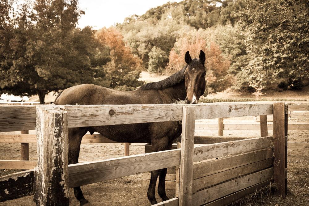 Black Horse 2-1.jpg