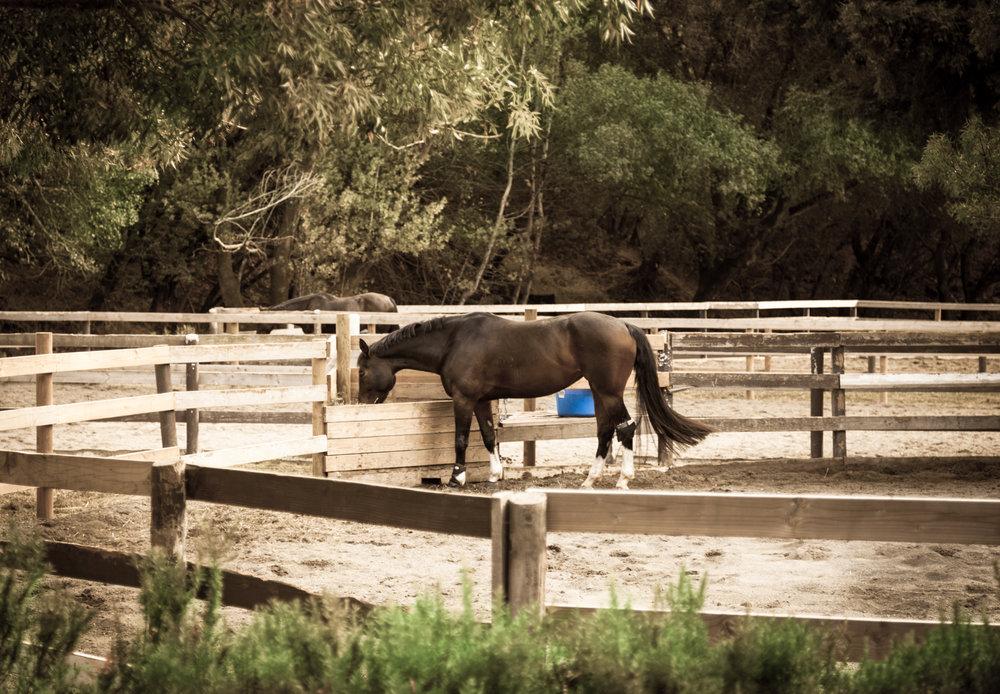 Black Horse 1-1.jpg