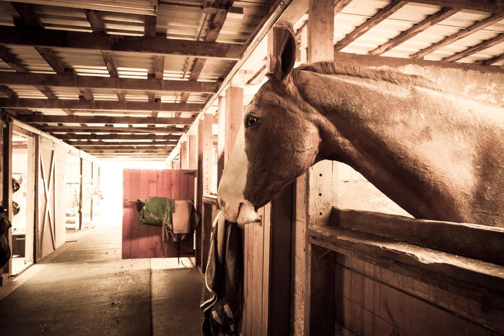 Horse Stall 3-1.jpg