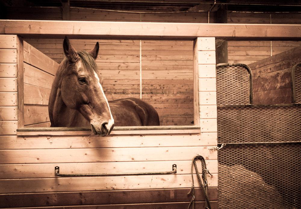 Horse Stall 2-1.jpg