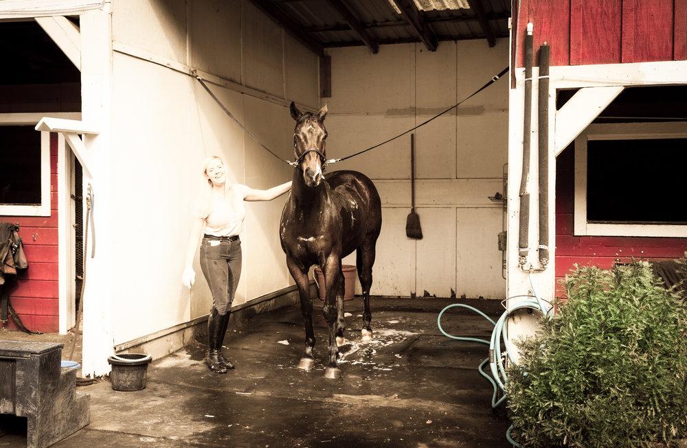 Horse Wash 4-1.jpg