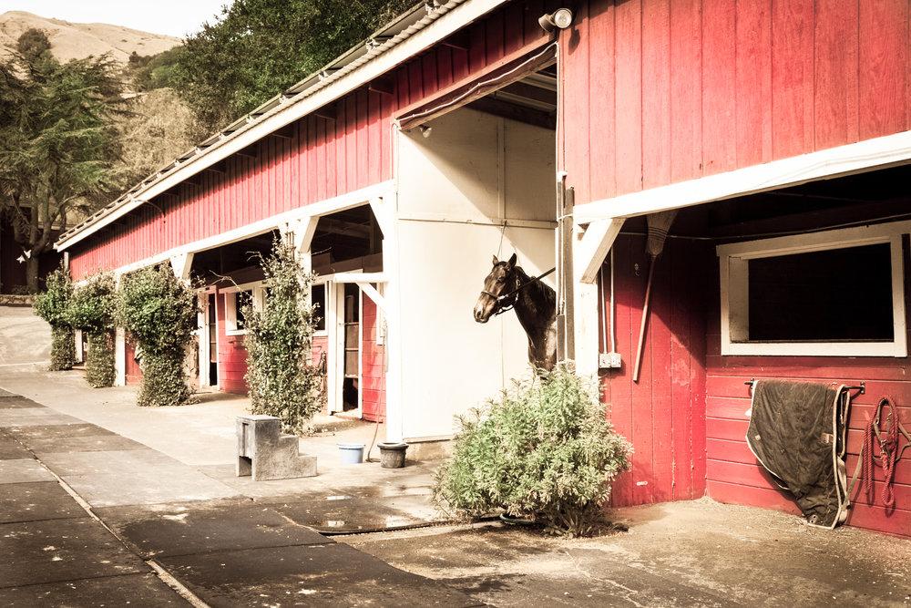 Horse Wash 3-1.jpg