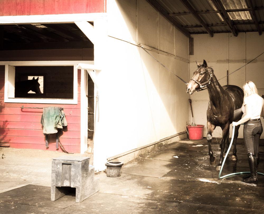 Horse Wash 1-1.jpg