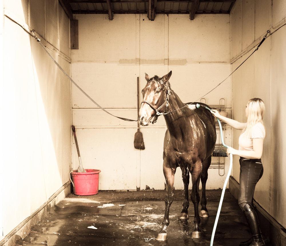 Horse Wash 2-1.jpg