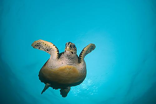 Turtleface.jpg