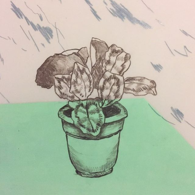 Tiny three inch drawing of one of my houseplants from about a year ago. Missing my studio as we are working on our house- my new home studio is going to be amazing though.