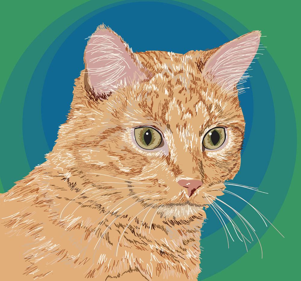 "Chester the Cat - 12"" x 12"" portrait"