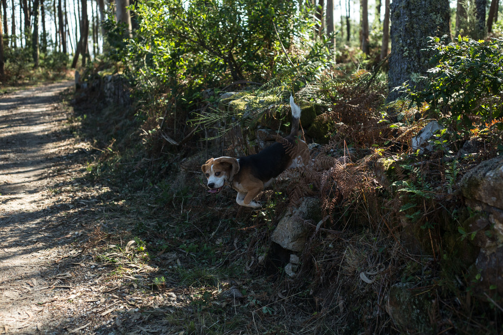 I did not know if it was a dog, or whatever they were hunting so I clicked the shutter as soon as the beast emerged.