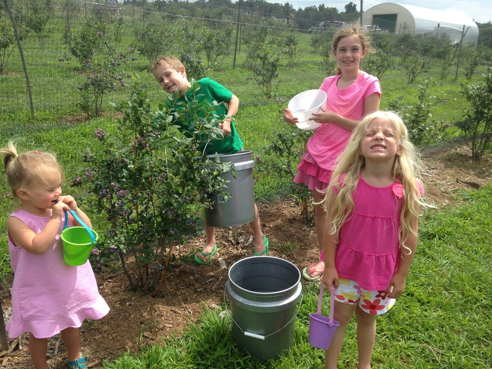 Ruby Putnam and the Hampton kids enjoy blueberry picking in the summer.