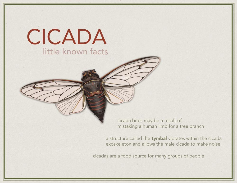 cicada final 4.jpg