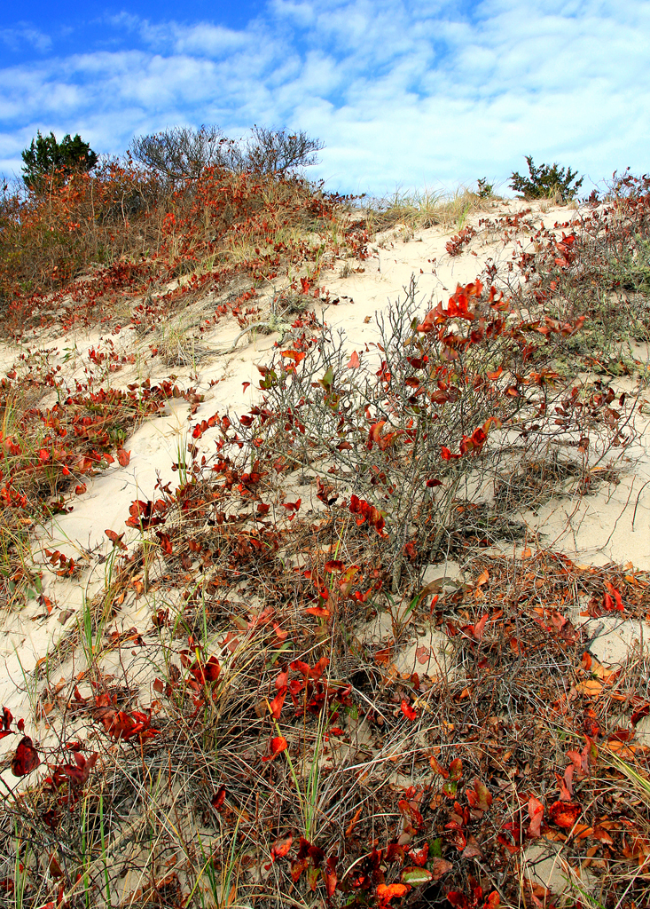 Barnstable Marsh Dune, Cape Cod, MA