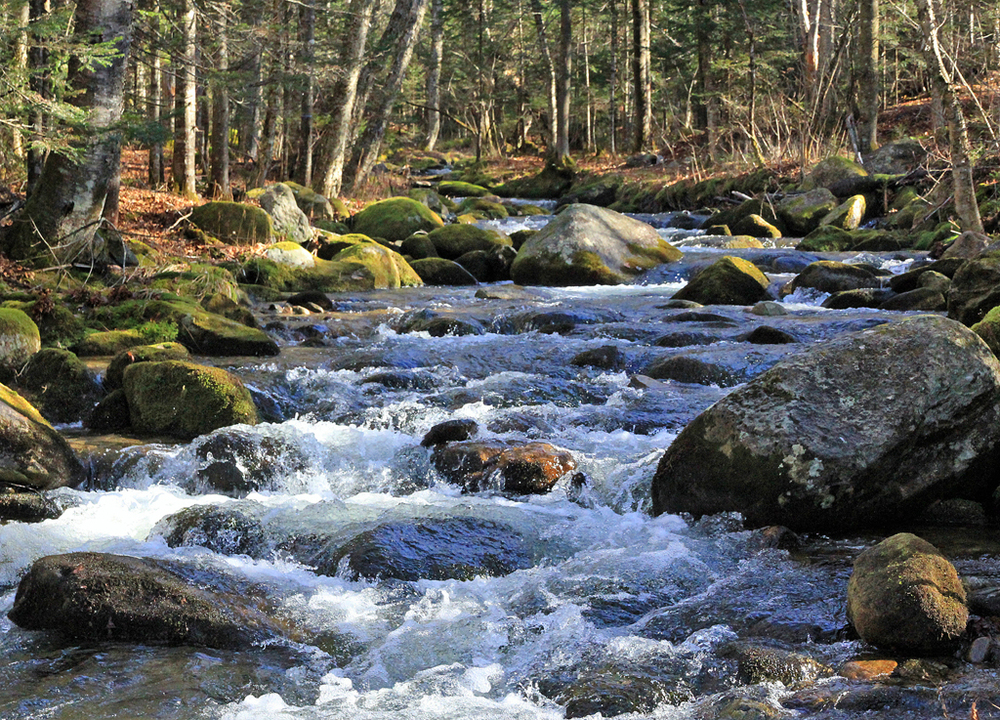 Little Bear Brook, White Mountain Nat. Forest, NH