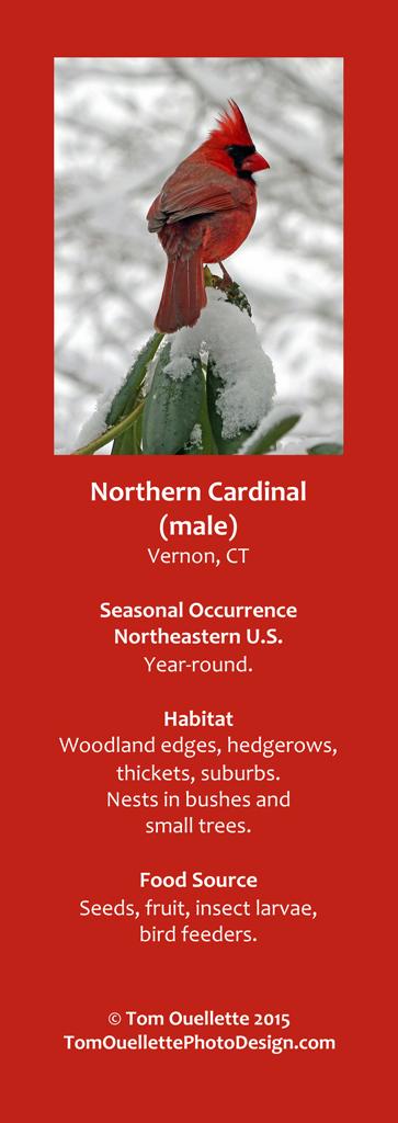 2 SS A6 Northern Cardinal.jpg