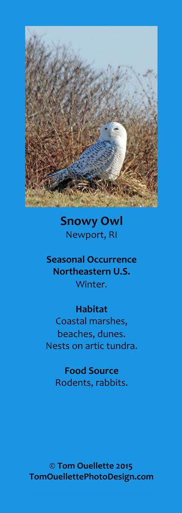 8 SS A11 Snowy Owl.jpg