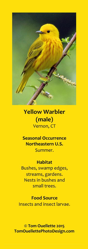 7 SS A16 Yellow Warbler.jpg