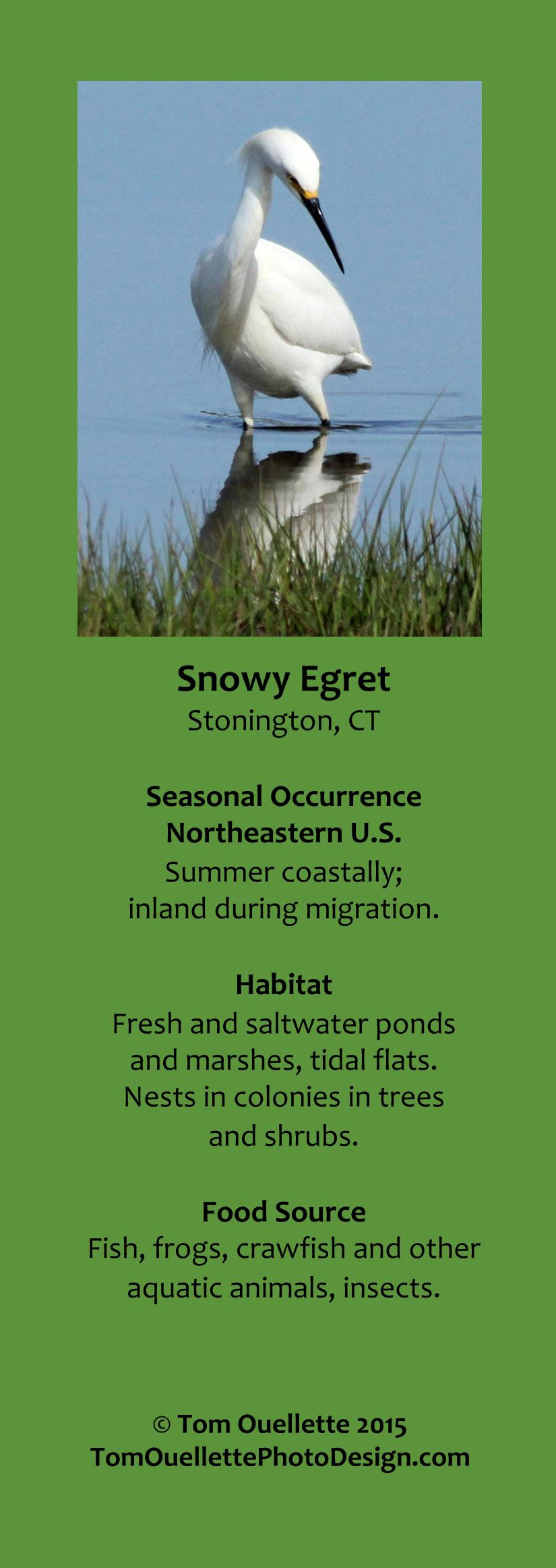9 SS A10 Snowy Egret.jpg