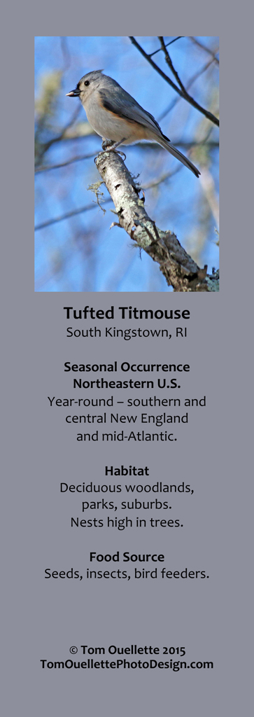 12 SS A14 Tufted Titmouse.jpg