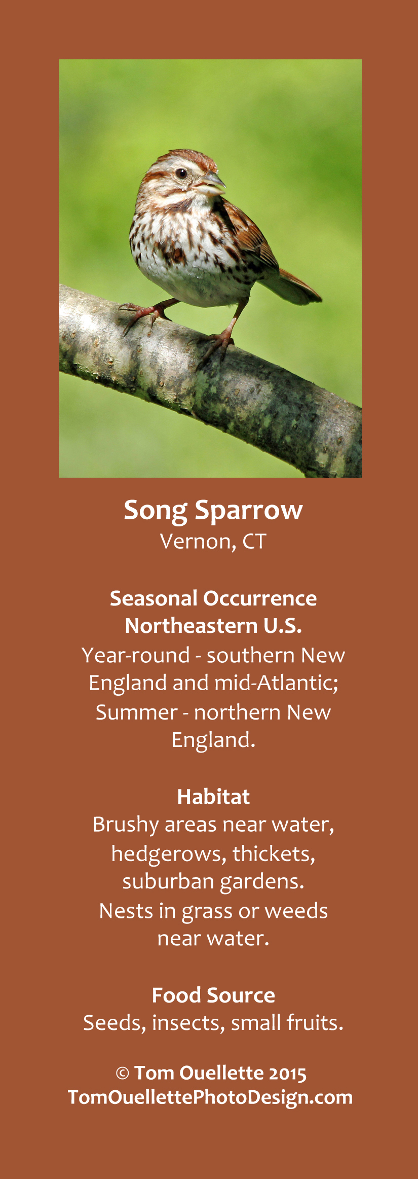 13 SS A12 Song Sparrow.jpg