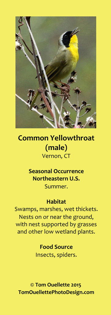 15 SS A17 Common Yellowthroat.jpg