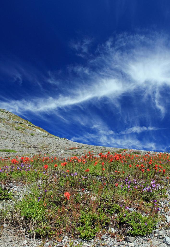 Johnston Ridge, Mt. St. Helens, WA