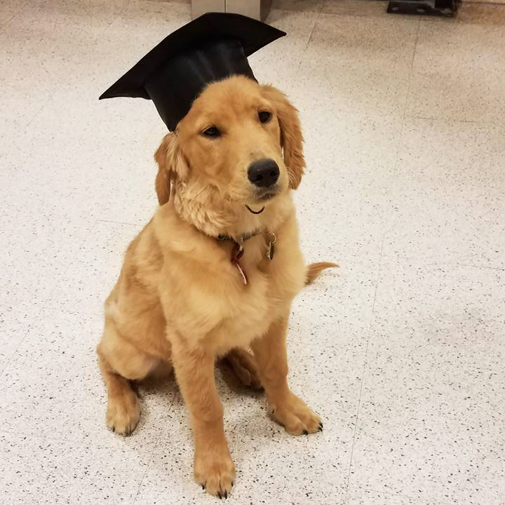 Meet Remi, a newly graduated puppy! Photo courtesy of Sara of The Senior team!