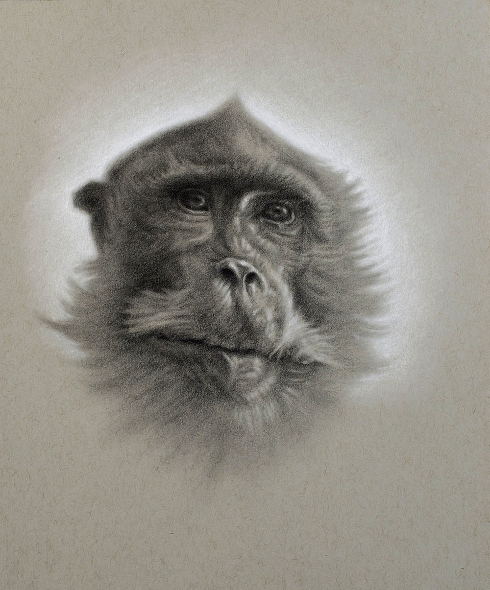 -Macaque drawing 1.jpg