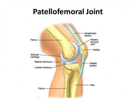 Image from https://www.physio-pedia.com/Patellofemoral_Joint