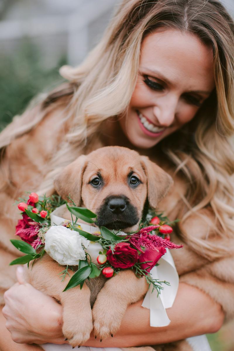 katelyn rescue pup tan.jpg