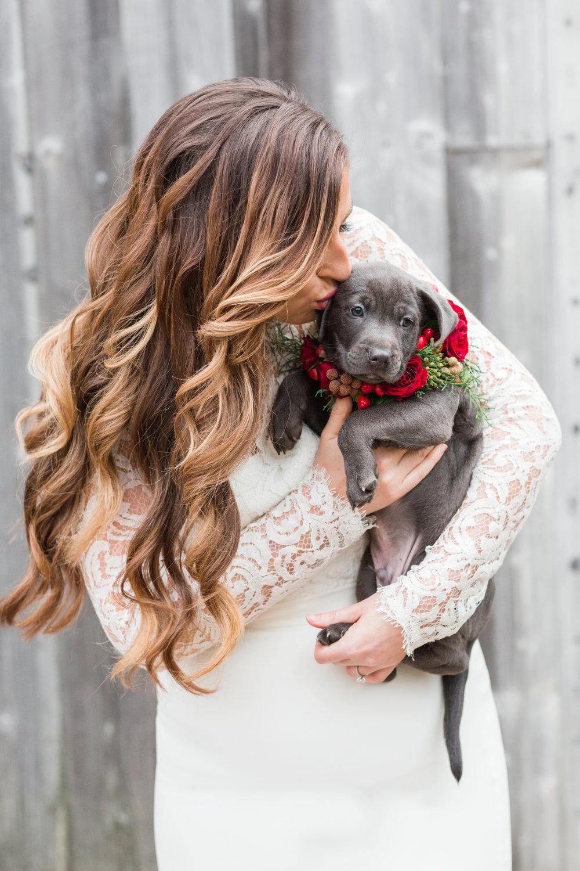Krysti hair and grey puppy shoot .jpg